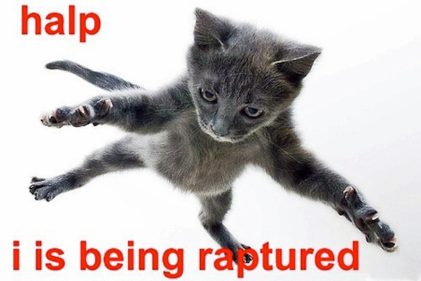 Rapture cat