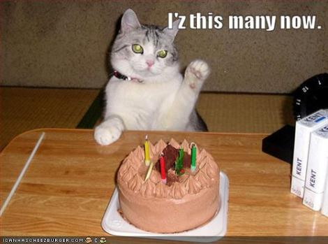 funny-pictures-birthday-cat-can-count