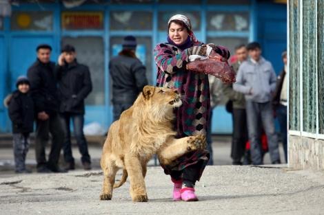img_pod_Dushanbe-tajikistan-lion-walk-2001