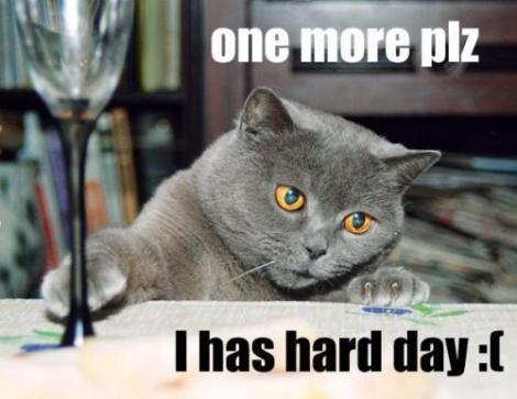 Stressed Cat2