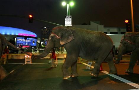 Circus+Elephants+Arrive+Staples+Center+Hours+251hpSeaXROl