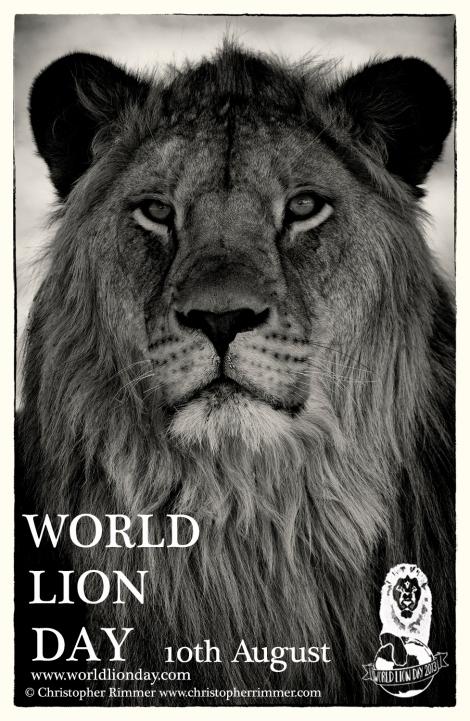 cr-lion-poster-copy