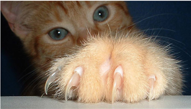 cat_claws