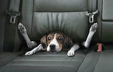 dog-stuck-in-car-seat