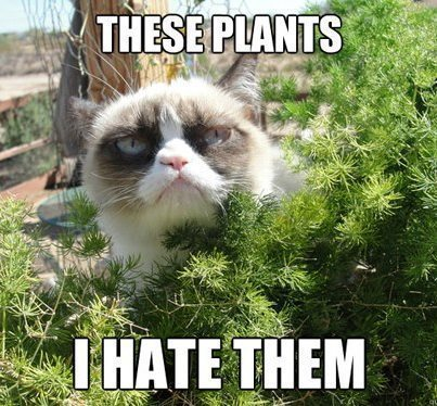 post-18996-Grumpy-Cat-gardening-meme--the-QJxm