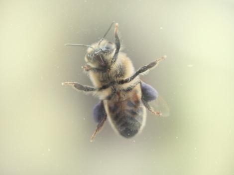 enhanced-buzz-16066-1381255818-2