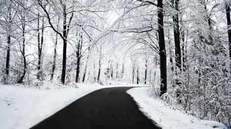 snowfall on trees