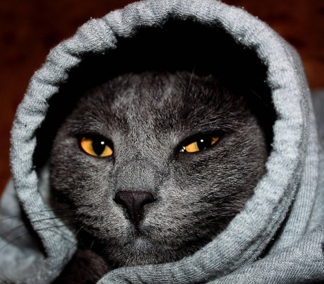 my-cat-being-cold-during-arizona-winter