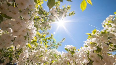 spring-wallpapers-2014-1