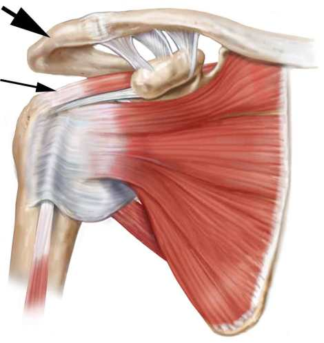 shoulder-and-rotator-cuff
