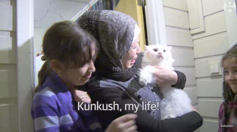 Lémouvante-histoire-de-Kunkush-ce-chat-de-migrants-irakiens-retrouve-ses-propriétaires-en…-Norvège-4-800x445